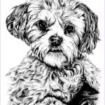 Dogs Coloring Pages For Adults Awesome Photos Dog Dogs Adult Coloring Pages
