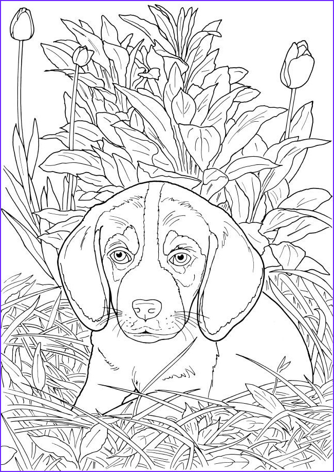 Dogs Coloring Pages for Adults Awesome Photos Wel E to Dover Publications Ch Lovable Cats and Dogs