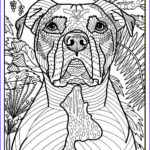 Dogs Coloring Pages For Adults Awesome Stock Free Printable American Pit Bull Terrier Coloring Page