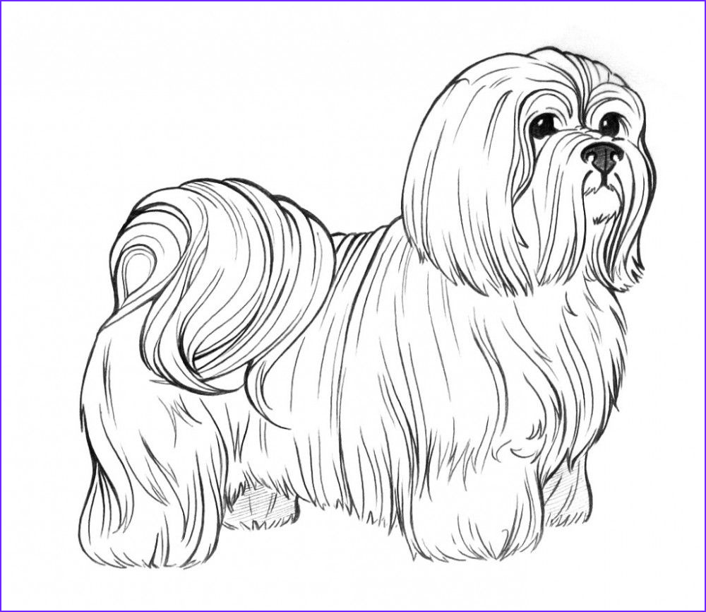 Dogs Coloring Pages for Adults Elegant Gallery Dog Breed Coloring Pages
