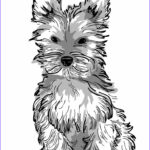 Dogs Coloring Pages For Adults Unique Images Dog Coloring Pages For Adults Best Coloring Pages For Kids