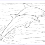 Dolphin Coloring Book Elegant Photos Top 9 Cute Dolphin Colouring Pages For Free Printable