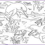 Dolphin Coloring Book Elegant Stock Free Coloring Pages Dolphins To The Print