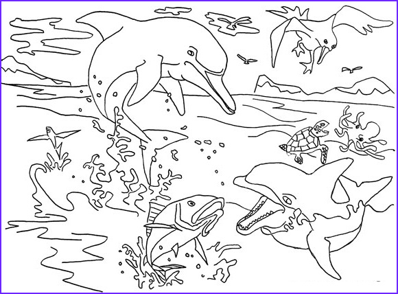 free coloring pages of dolphins to