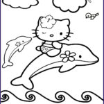 Dolphin Coloring Book New Images September 2013