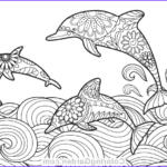 Dolphin Coloring Book Unique Photography Pin By Muse Printables On Adult Coloring Pages At