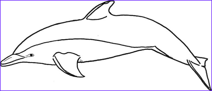 Dolphin Coloring Pictures Beautiful Photography Dolphin Templates Printable