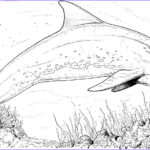 Dolphin Coloring Pictures Unique Photos Bottlenose Dolphin Coloring Pages