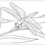 Dragon Fly Coloring Beautiful Collection Dragonfly Free Coloring Pages