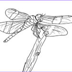 Dragon Fly Coloring Beautiful Image Free Printable Dragonfly Coloring Pages For Kids