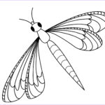Dragon Fly Coloring Inspirational Collection Dragonfly Clipart Coloring Page Pencil And In Color