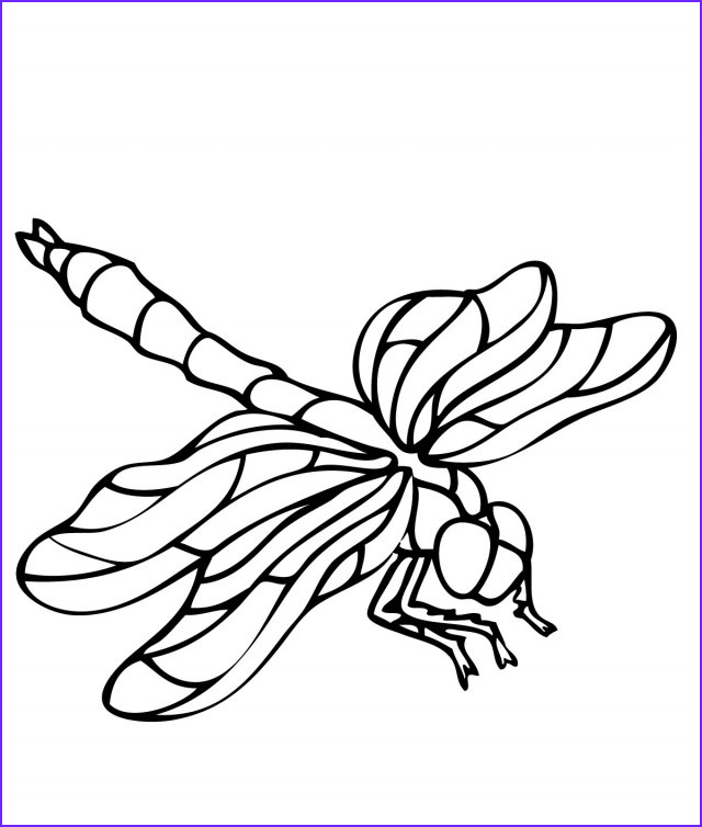 cartoon dragonfly pictures