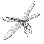 Dragon Fly Coloring Unique Photos Free Printable Dragonfly Coloring Pages For Kids