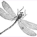 Dragonfly Coloring Awesome Gallery Free Printable Dragonfly Coloring Pages For Kids