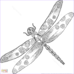 Dragonfly Coloring Beautiful Gallery Zentangle Dragonfly Coloring Page