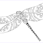 Dragonfly Coloring Best Of Gallery Intricate Dragonfly Coloring Page