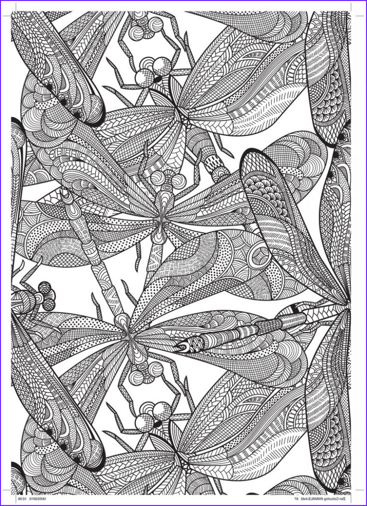 Dragonfly Coloring Elegant Photos Dragonfly Free Pattern Download