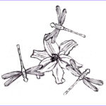 Dragonfly Coloring New Photography Free Printable Dragonfly Coloring Pages For Kids