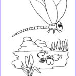 Dragonfly Coloring New Photos Free Printable Dragonfly Coloring Pages For Kids