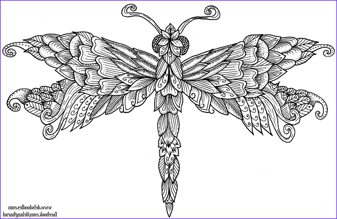 Dragonfly Colouring Page