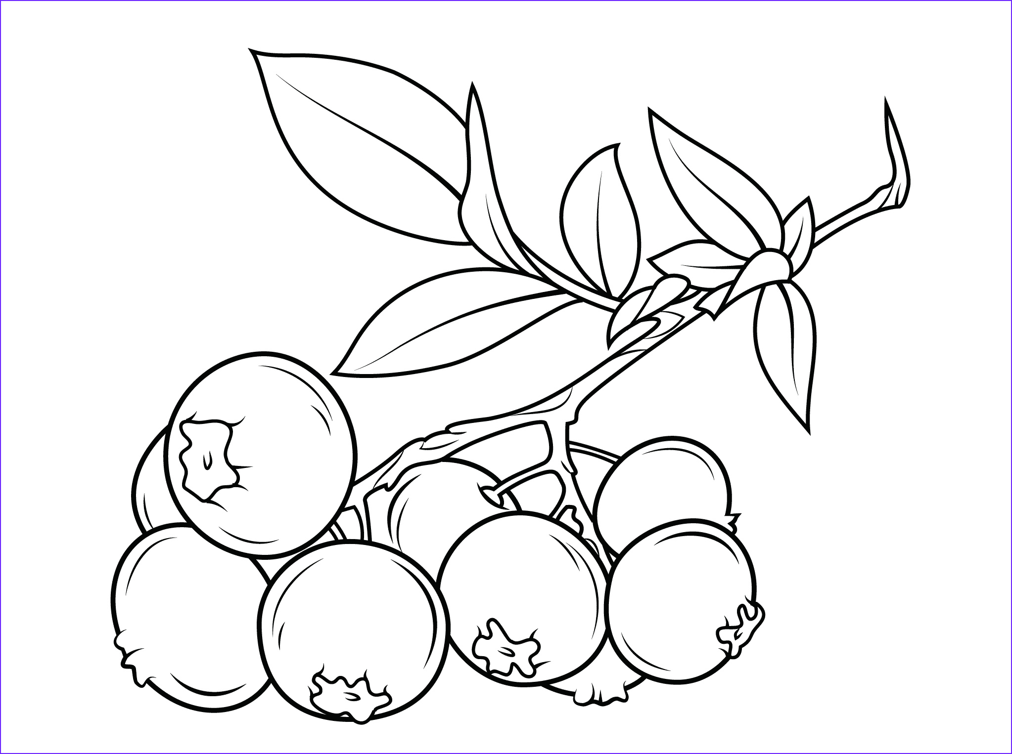 Drawing and Coloring Beautiful Photos Blueberries Coloring Pages to and Print for Free