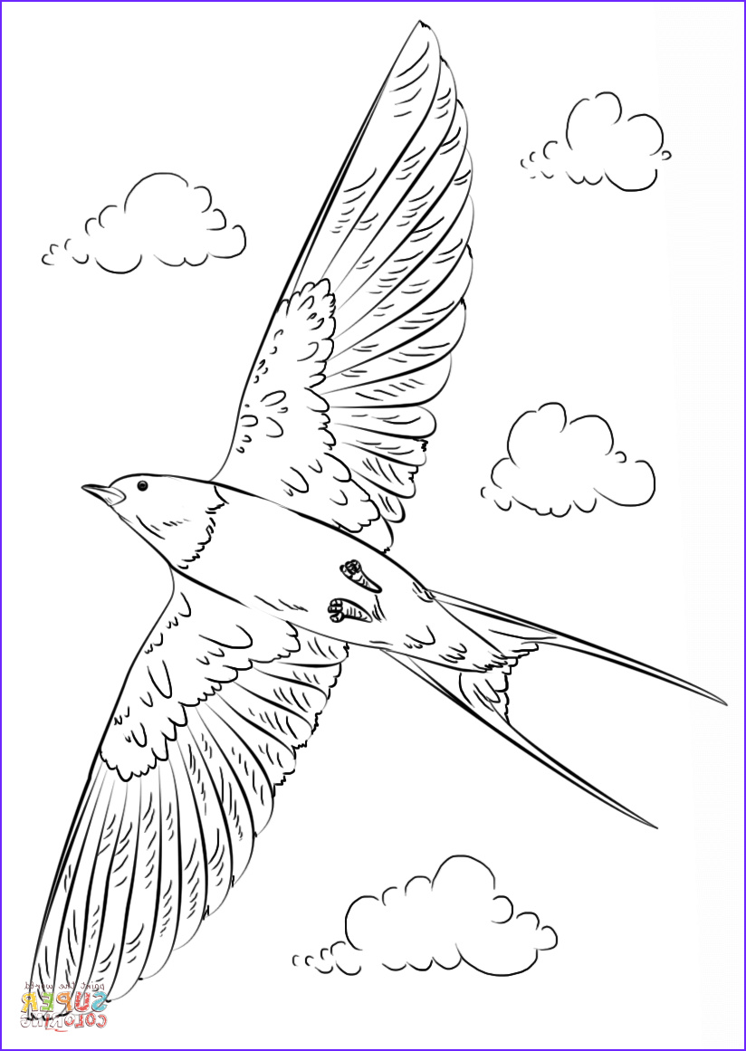 Drawing Coloring Book Cool Photos Barn Swallow In Flight Coloring Page