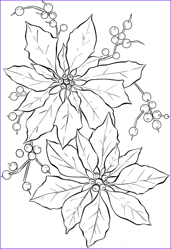 Drawing Coloring Book Elegant Image Poinsettia Line Art Christmas the Graphics Fairy