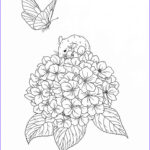 Drawing Coloring Book Elegant Photos Harmony Nature Adult Coloring Book Pg 35