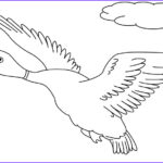 Duck Coloring Beautiful Photos Printable Duck Coloring Pages For Kids