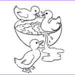 Duck Coloring Elegant Photos Ducks Coloring Pages To And Print For Free