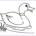 Duck Coloring Inspirational Images Duck Coloring Pages Forcoloringpages