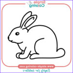 Easy Coloring Elegant Photography Simple Coloring Animals