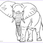 Elephant Coloring Pages Best Of Gallery Free Printable Elephant Coloring Pages For Kids