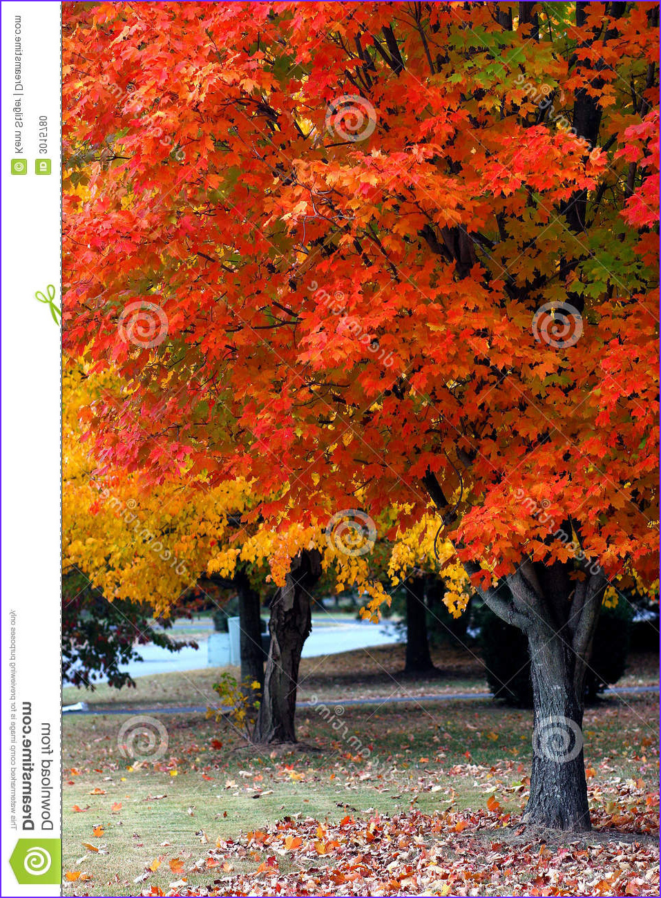 Fall Coloring Best Of Stock Fall Color In Nashville Stock Image