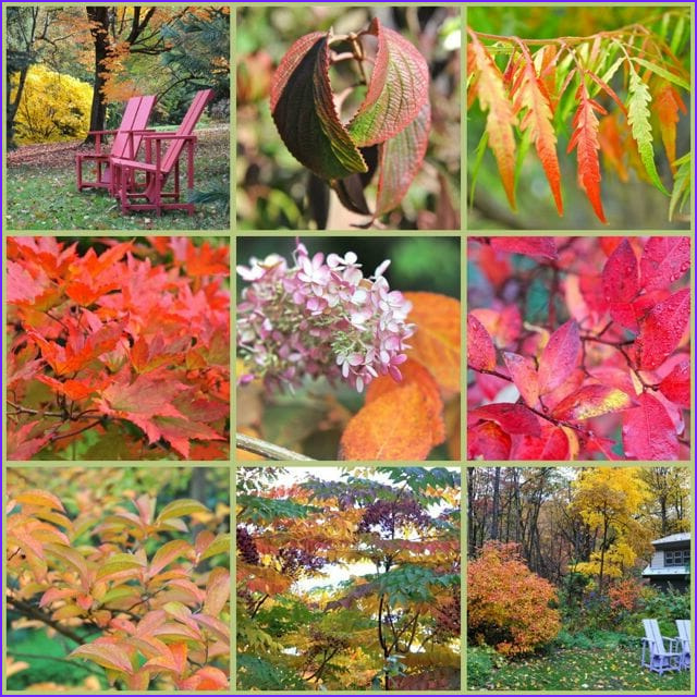 Fall Coloring New Collection 12 Trees and Shrubs for Great Fall Foliage Color A Way
