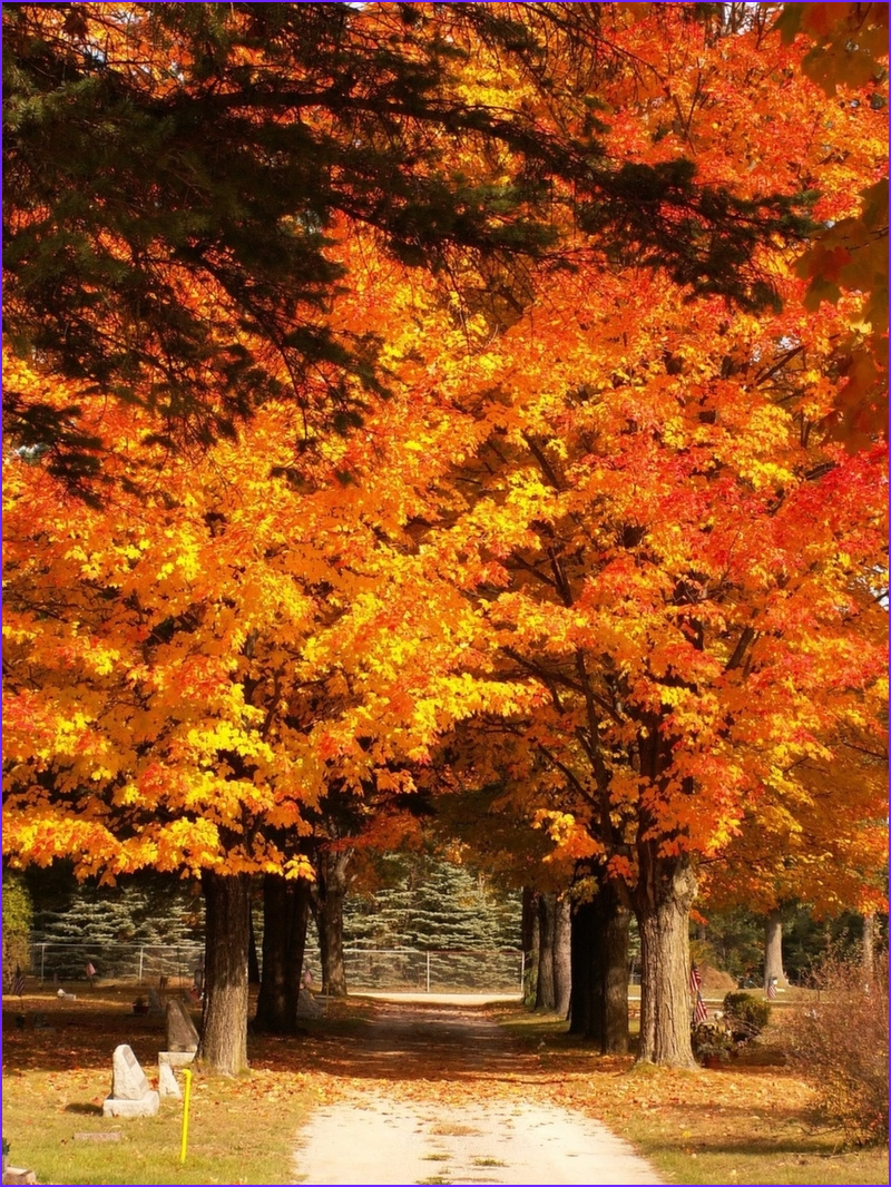 Fall Coloring New Image Fall Color tours In Grayling Mi