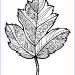 Fall Coloring Pages For Adults Unique Image 176 Best Coloring Pages Images On Pinterest
