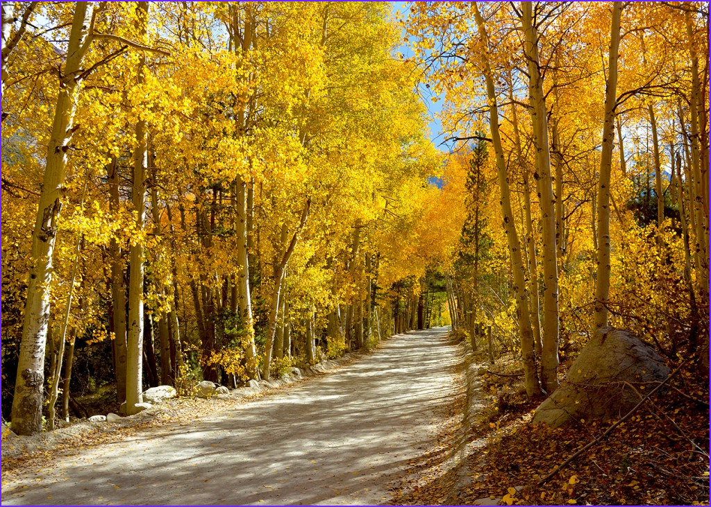 Fall Coloring Unique Image Dramatic Change In the High Sierra – Go now – California