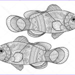 Fish Coloring Pages For Adults Beautiful Gallery Clown Fish Coloring Book For Adults Vector Stock Vector