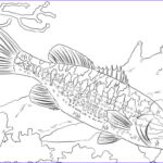 Fish Coloring Pages For Adults Inspirational Image Pledge Allegiance Coloring Pages Get Coloring Page
