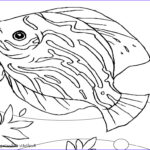 Fish Coloring Pages For Adults New Photography Coloring Pages For Kids Animals Coloringhd