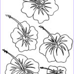 Flower Coloring Awesome Collection Free Printable Hibiscus Coloring Pages For Kids