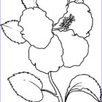 Flower Coloring Beautiful Stock Free Printable Hibiscus Coloring Pages For Kids