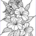 Flower Coloring Book Pages Beautiful Image Free Printable Hibiscus Coloring Pages For Kids