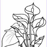 Flower Coloring Book Pages Cool Photos Free Printable Flower Coloring Pages For Kids