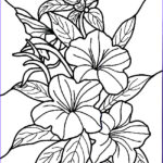 Flower Coloring Book Pages Luxury Photos Free Printable Hibiscus Coloring Pages For Kids