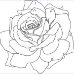 Flower Coloring Cool Gallery Free Printable Flower Coloring Pages For Kids Best