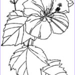 Flower Coloring Elegant Photos Free Printable Hibiscus Coloring Pages For Kids