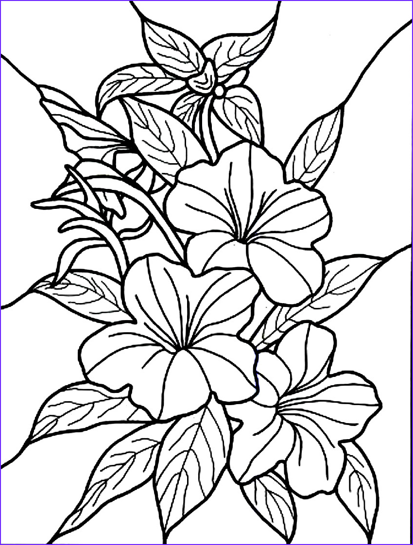 Flower Coloring Pages for Adults Awesome Images Free Printable Hibiscus Coloring Pages for Kids