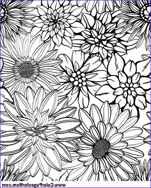 Flower Coloring Pages for Adults Beautiful Photos Flower Coloring Page 79 Coloring therapy